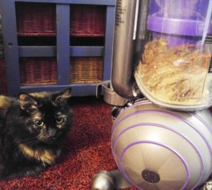Can The Dyson Ball Animal 2 Conquer My Fur Issue?