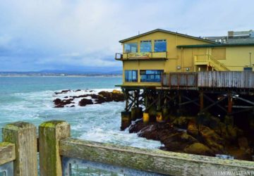 I Touched An Octopus, Exclusive Baby Otter Pics And More Fun At Monterey Bay Aquarium