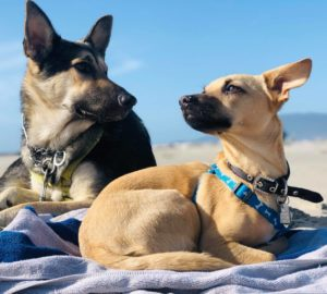 5 Fabulous Dog Products That You Will Love